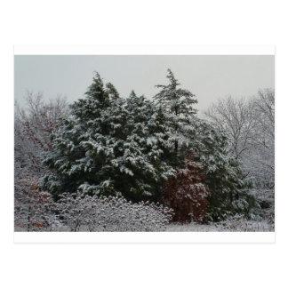 Cartão Postal Evergreen do inverno