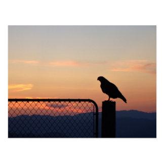 Cartão Postal Falcão atado vermelho no por do sol, Humboldt