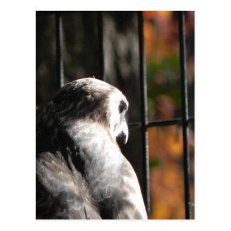 Cartão Postal Falcão em um santuário de pássaro