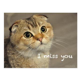 Cartão Postal Falta bonito do gato dos macarronetes da dobra do