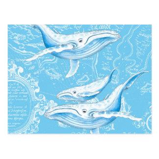 Cartão Postal Família das baleias azuis