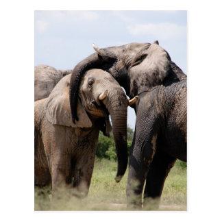 Cartão Postal Família do elefante de África