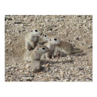 Cartão Postal Família Redondo-atada bebê do esquilo à terra