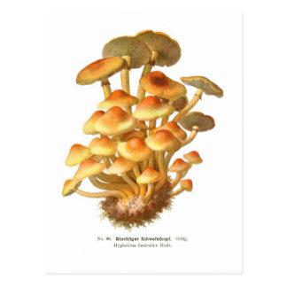 Cartão Postal Fasciculare de Hypholoma