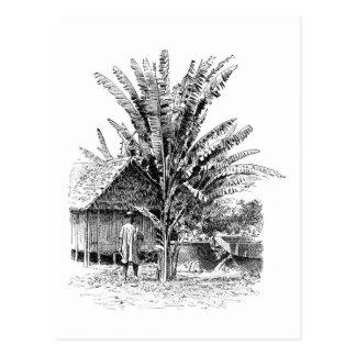 Cartão Postal Fazendeiro da banana em Madagascar