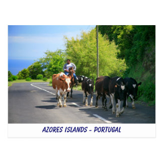 Cartão Postal Fazendeiro e vacas
