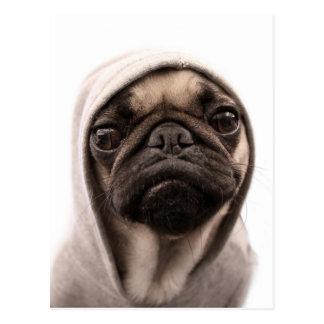 Cartão Postal Feche acima do pug que veste o hoodie.