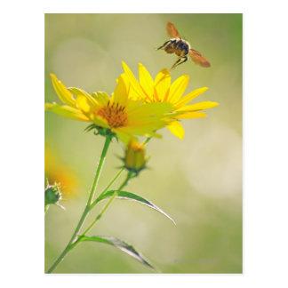 Cartão Postal Feche acima do vôo da abelha do mel para o amarelo