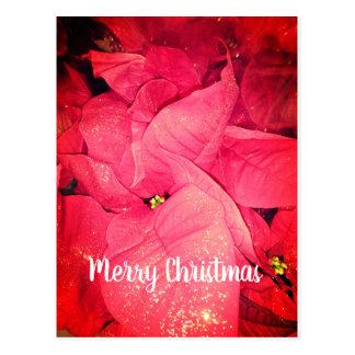 Cartão Postal Feliz Natal vermelho da flor do Natal