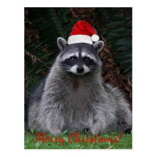 Cartão Postal Feriado da foto do guaxinim do Natal