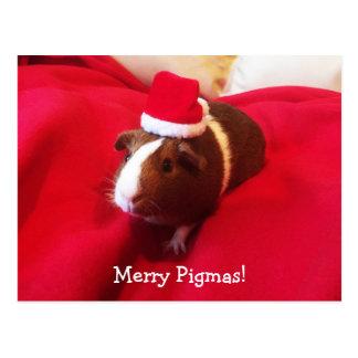Cartão Postal Feriado do Natal de Papai Noel da cobaia