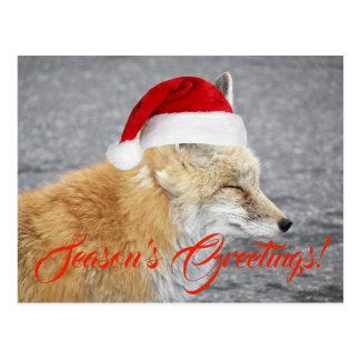 Cartão Postal Feriado sonolento do Fox do Natal