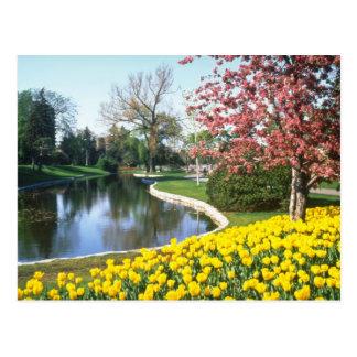 Cartão Postal festival amarelo da tulipa, Quinta Avenida, flor