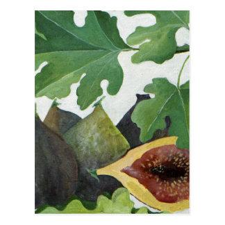Cartão Postal Figos 2013