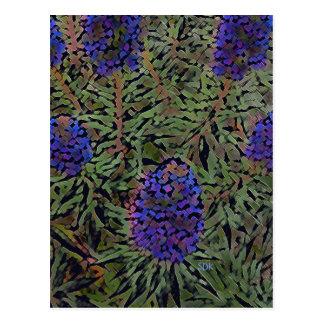 Cartão Postal Fileiras da planta roxa Del Mar da lavanda de
