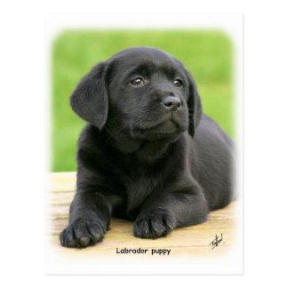 Cartão Postal Filhote de cachorro 9Y267D-109 de Labrador