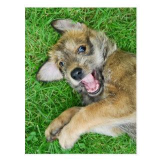 Cartão Postal Filhote de cachorro bonito de Berger Picard do cão