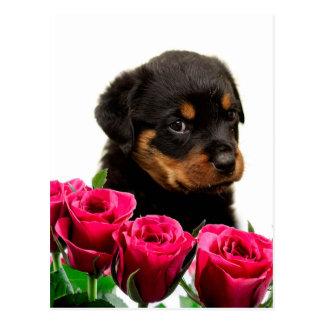 Cartão Postal Filhote de cachorro cor-de-rosa de Rottweiler dos