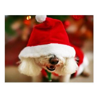 Cartão Postal Filhote de cachorro de Bichon Frise que veste o