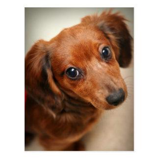 Cartão Postal Filhote de cachorro de cabelos compridos do