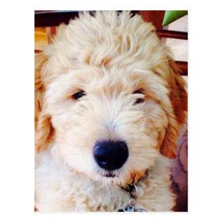 Cartão Postal Filhote de cachorro de Goldendoodle
