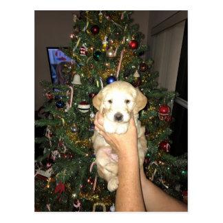 Cartão Postal Filhote de cachorro de GoldenDoodle com árvore de