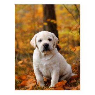 Cartão Postal Filhote de cachorro de labrador retriever