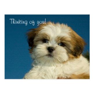 """Cartão Postal Filhote de cachorro de Shih Tzu """"que pensa de"""
