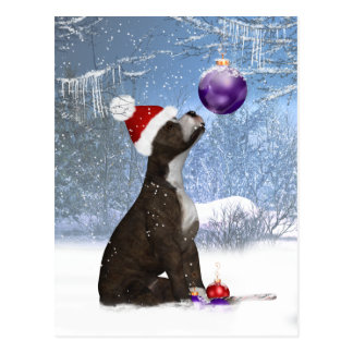 Cartão Postal Filhote de cachorro de Staffordshire bull terrier