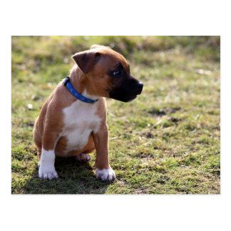Cartão Postal Filhote de cachorro de Staffy