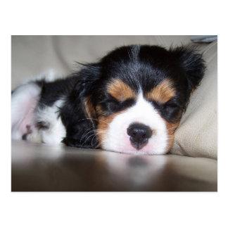 Cartão Postal Filhote de cachorro descuidado do Spaniel de Koda