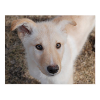 Cartão Postal Filhote de cachorro distorcido