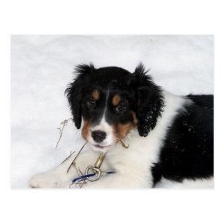 Cartão Postal filhote de cachorro do bwt dos ess