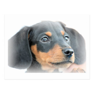 Cartão Postal Filhote de cachorro do Dachshund