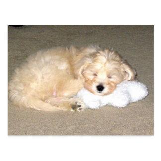 Cartão Postal Filhote de cachorro do sono