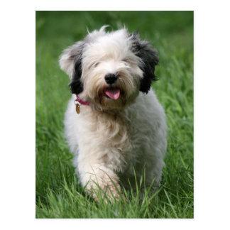 Cartão Postal filhote de cachorro do terrier tibetano