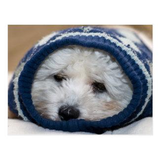 Cartão Postal Filhote de cachorro dos azuis do inverno