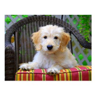 Cartão Postal Filhote de cachorro dourado do Doodle