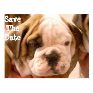 Cartão Postal Filhote de cachorro inglês do buldogue