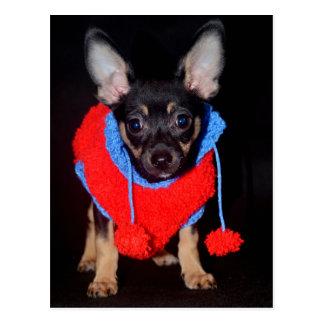Cartão Postal Filhote de cachorro na camisola lanoso