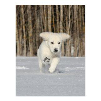 Cartão Postal Filhote de cachorro polar