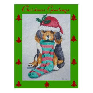 Cartão Postal filhote de cachorro preto e marrom bonito com meia