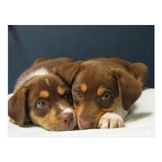 Cartão Postal Filhotes de cachorro