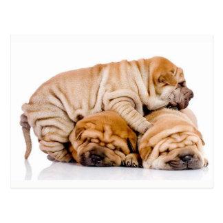Cartão Postal Filhotes de cachorro bonitos de Shar Pei
