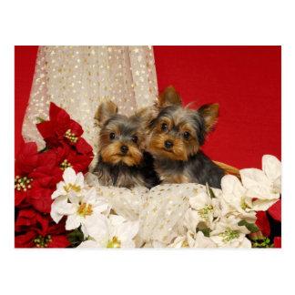 Cartão Postal Filhotes de cachorro de Yorkie com poinsétias