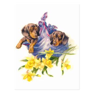 Cartão Postal Filhotes de cachorro do Dachshund na cobertura com