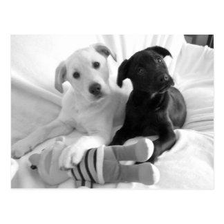 Cartão Postal filhotes de cachorro pretos do branco de n