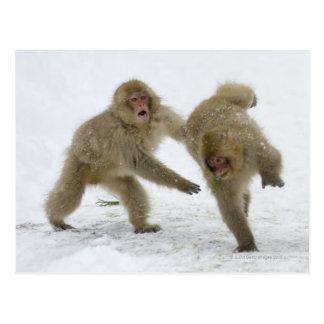 Cartão Postal Filhotes japoneses do macaco da neve que jogam na