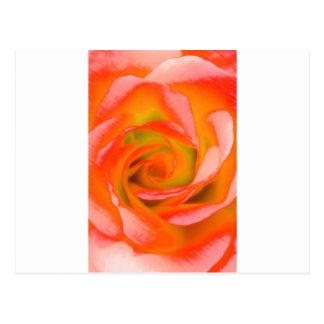 Cartão Postal Fim-acima cor-de-rosa da laranja