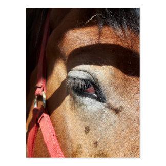 Cartão Postal Fim-Acima do cavalo na feira de mundo de Rockton